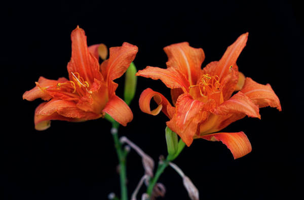 Photograph - Flowers by CA Johnson