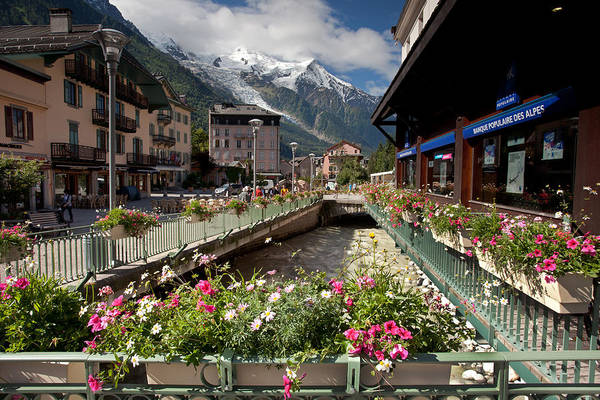 Photograph - Flowers, Chamonix by Aivar Mikko