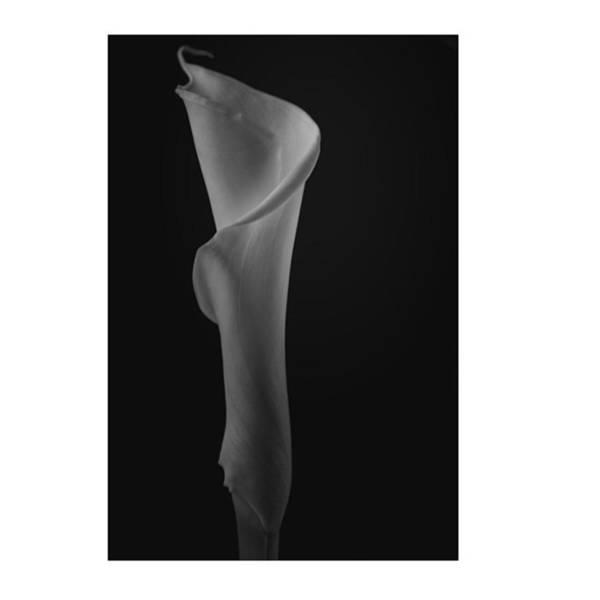 Lilies Wall Art - Photograph - #flowers #flower #petal #petals #nature by David Haskett II
