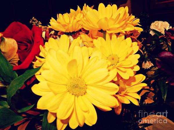 Photograph - Flowers For My Baby by Diamante Lavendar