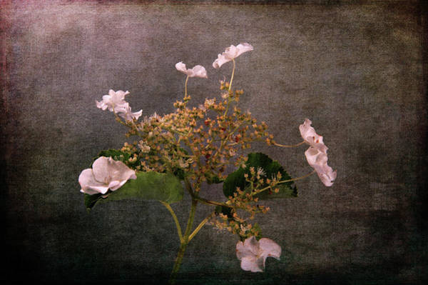 Photograph - Flowers For The Mind by Randi Grace Nilsberg