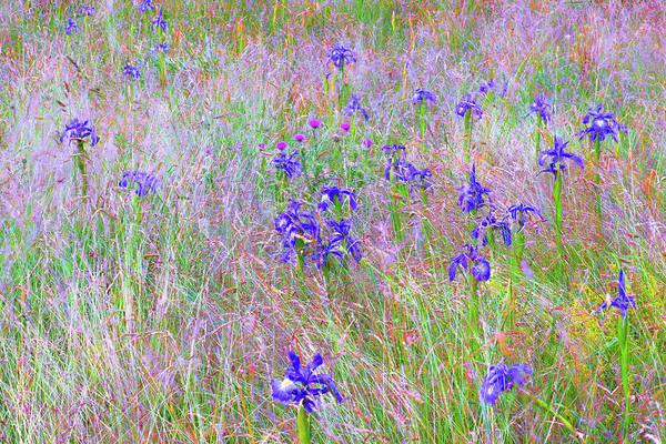 Flowers From Ossue Path Art Print