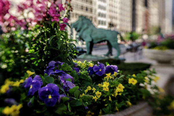 Photograph - Flowers In Chicago  by Sven Brogren
