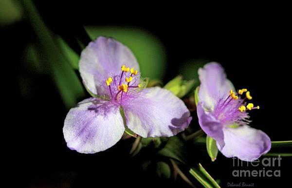 Photograph - Flowers In Natural Light by Deborah Benoit