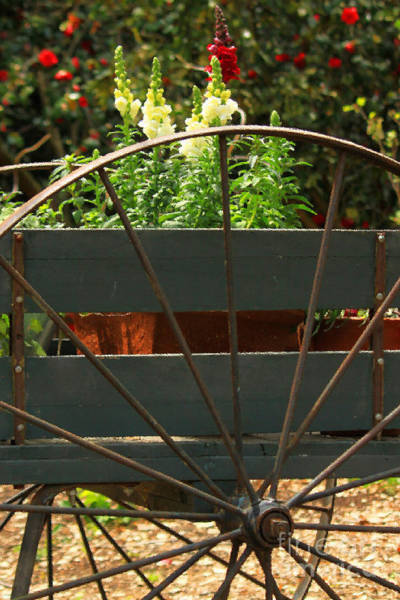 Photograph - Flowers In The Cart by James Eddy