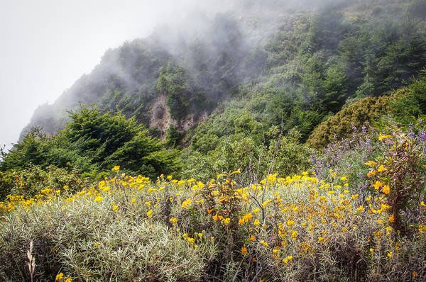 Photograph - Flowers In The Mist 2 by Peter Dyke