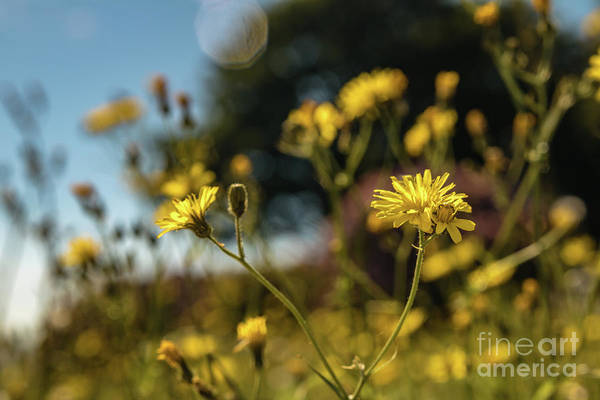 Photograph - Flowers In The Park by Marc Daly