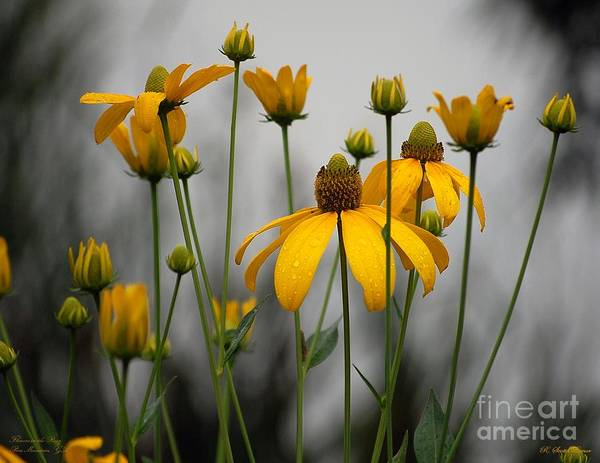 Susan Photograph - Flowers In The Rain by Robert Meanor