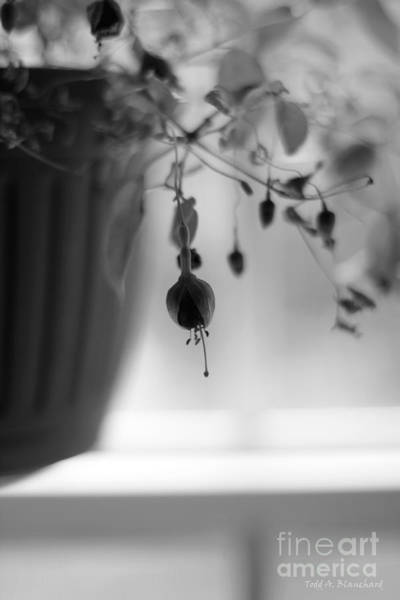 Photograph - Flowers In The Window by Todd Blanchard