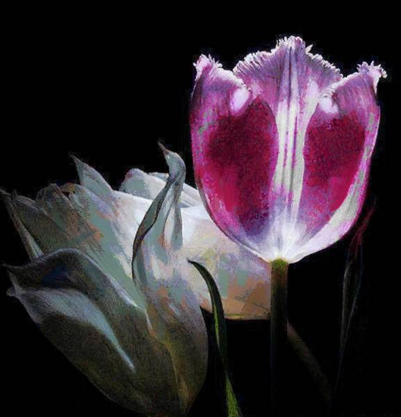 Digital Art - Flowers Lit by Catherine Lott