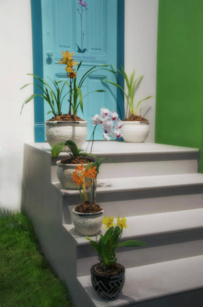 Photograph - Flowers On A Step by Bill Cannon