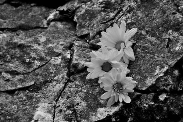 Photograph - Flowers On Rocks by Ivan Slosar