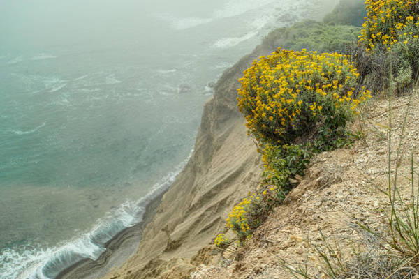 Photograph - Flowers On The Cliff 2 by Peter Dyke