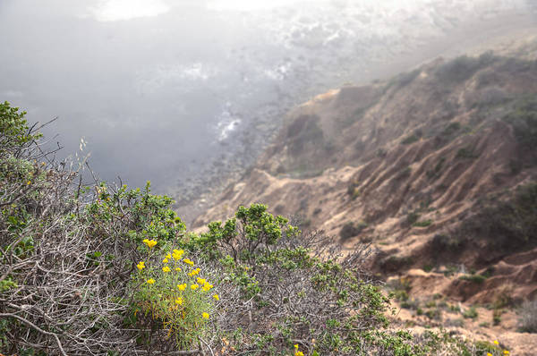 Photograph - Flowers On The Cliff 4 by Peter Dyke