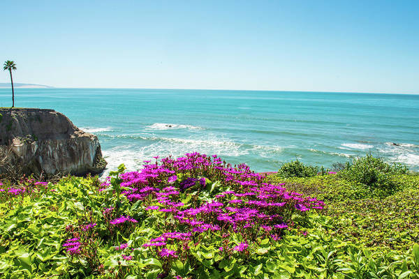 Photograph - Flowers On The Cliff by Paul Johnson