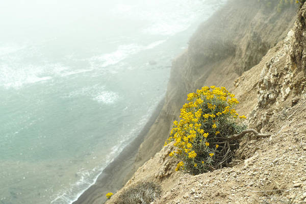 Photograph - Flowers On The Cliff by Peter Dyke