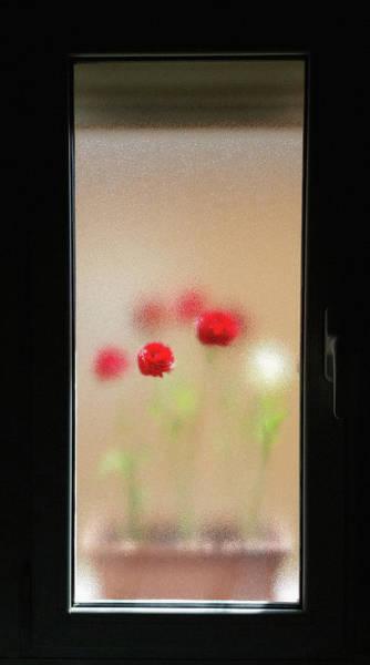 Wall Art - Photograph - Flowers Through The Window by Rafa Rivas