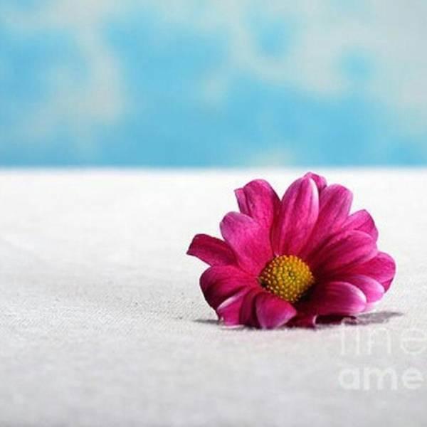 Grace Wall Art - Photograph - #flowerstalking #art #photography by Randi Grace Nilsberg