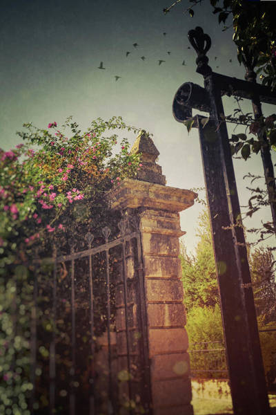 Wall Art - Photograph - Flowery Iron Gate by Carlos Caetano