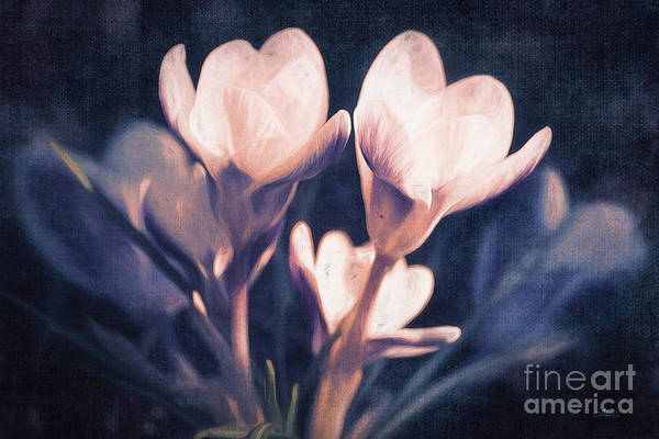 Photograph - Flowery Spring Day by Jutta Maria Pusl