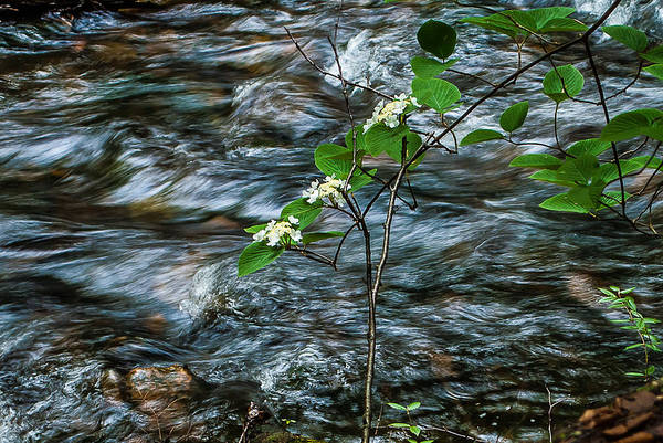 Photograph - Flower Against Water 8673 by G L Sarti
