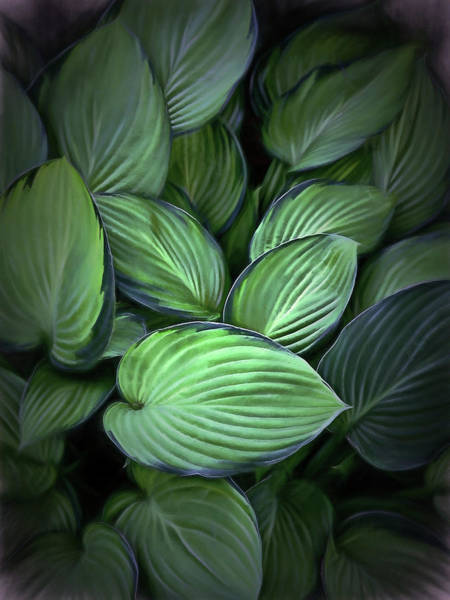 Photograph - Flowing Hostas by Phyllis Meinke