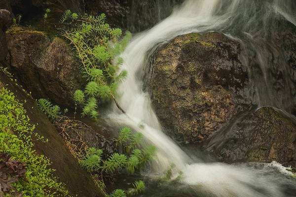 Photograph - Flowing Stream by David Coblitz