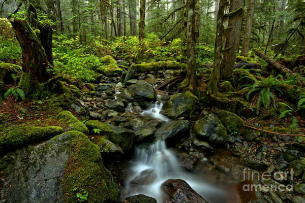 Photograph - Flowing Through The Pacific Northwest by Adam Jewell