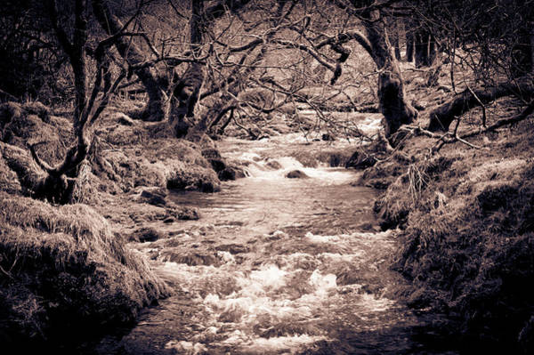 Photograph - Flowing Through The Woods by Helen Northcott