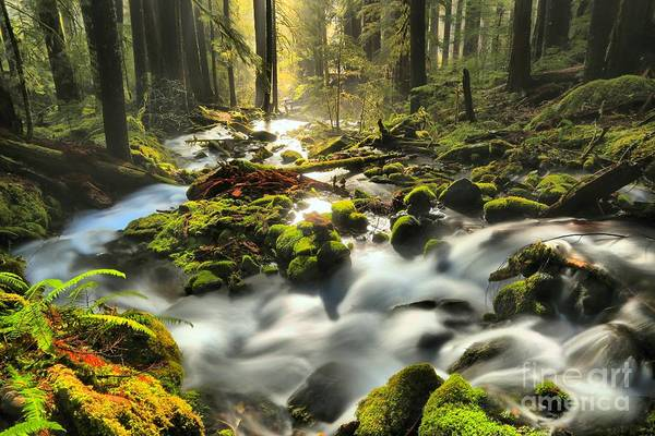 Photograph - Flowing To The Light by Adam Jewell