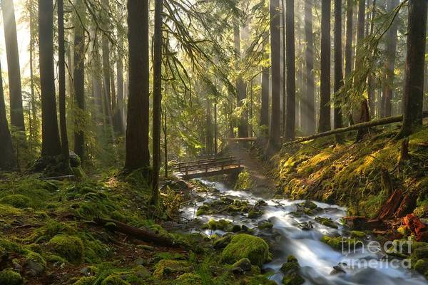 Photograph - Flowing To The Sun by Adam Jewell