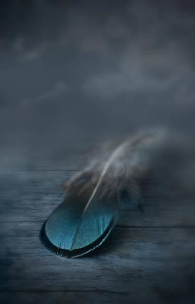 Softly Photograph - Flown by Maggie Terlecki