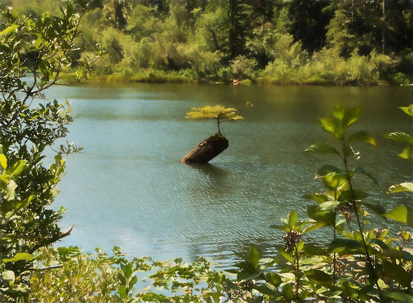 Photograph - Tree In Fairy Lake by Marilyn Wilson
