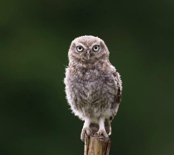 Photograph - Fluffy Mcfluff-face by Peter Walkden