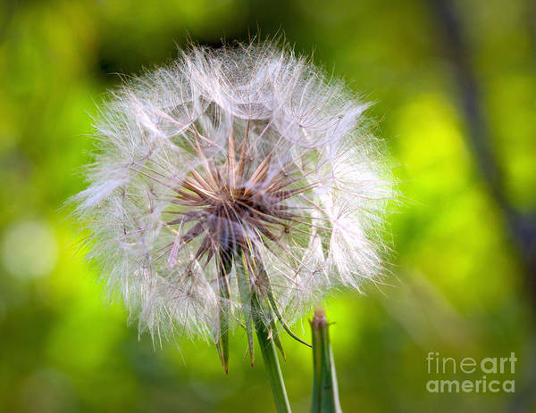 Photograph - Fluffy by Roger Monahan