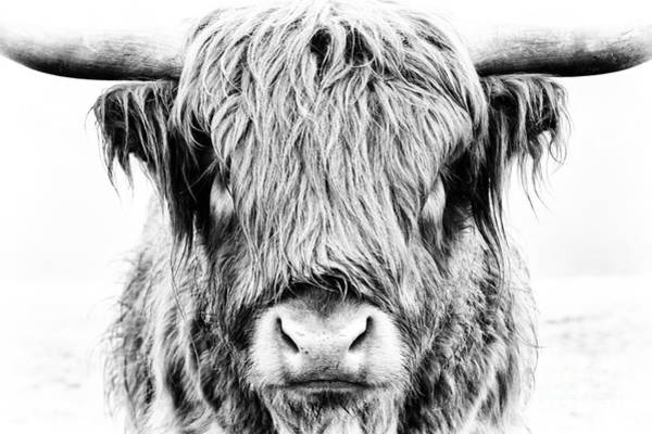Livestock Photograph - Fluffy by Tim Gainey