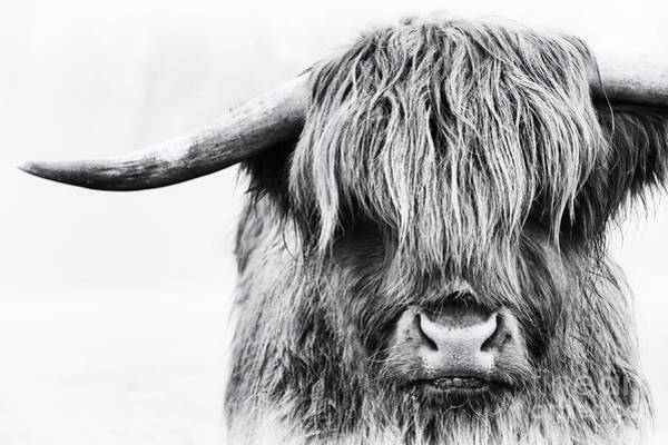Farm Animals Photograph - Fluffys Mate by Tim Gainey