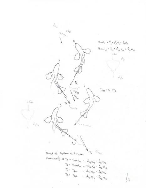 Schooling Drawing - Fluid Body Animal School by Russel Mulla