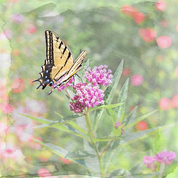 Photograph - Flutter By by Jennifer Grossnickle