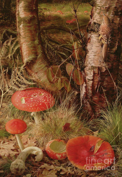 Wall Art - Painting - Fly Agarics by Raymond Booth
