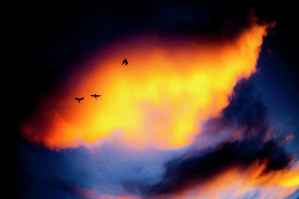 Photograph - Fly Away by Eric Christopher Jackson