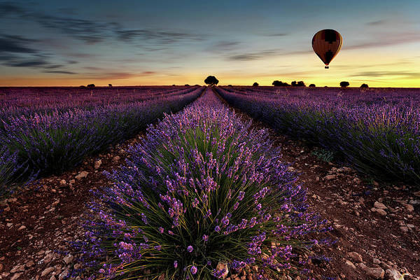 Ballons Photograph - Fly Away by Jorge Maia