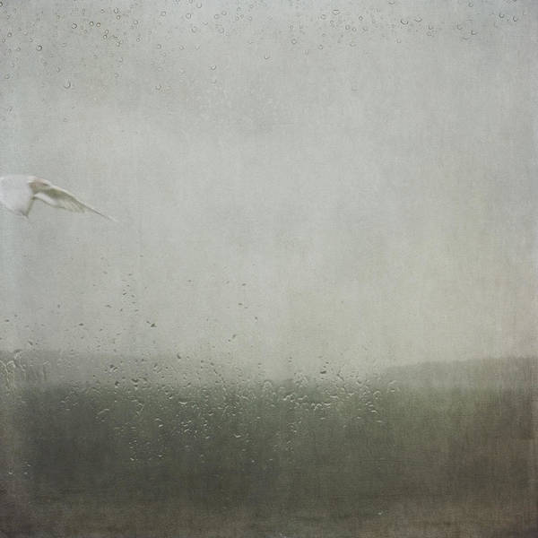 Photograph - Fly Between The Raindrops by Sally Banfill