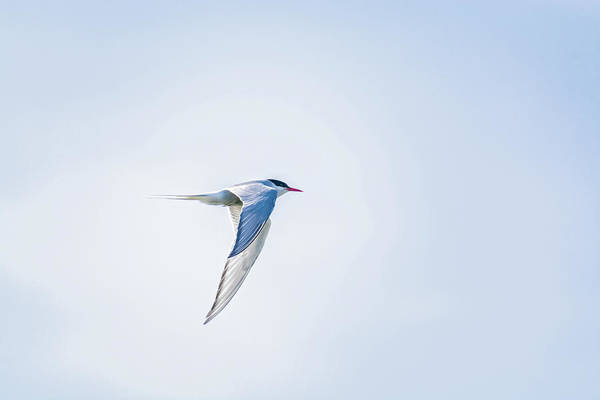 Photograph - Fly-by by Emily Bristor