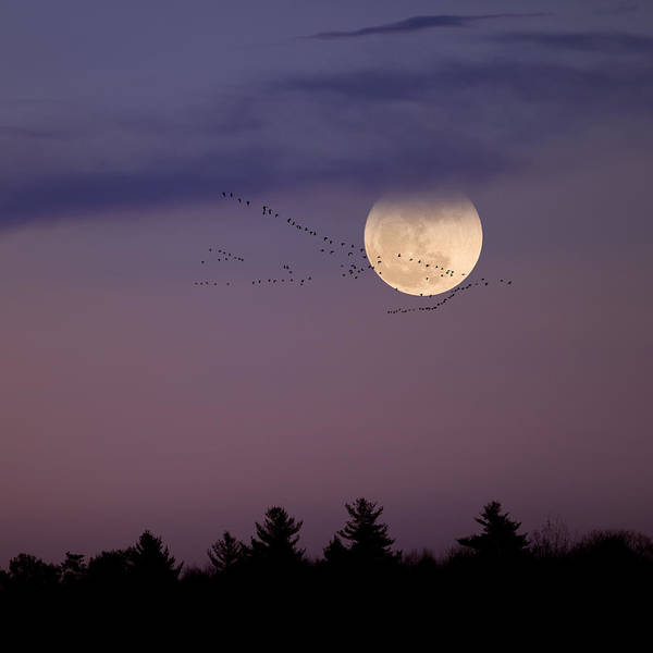 Photograph - Fly By Night Square by Bill Wakeley