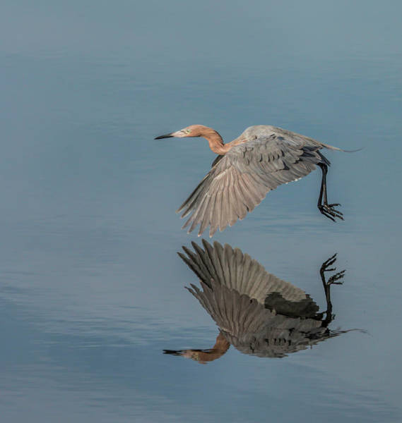Photograph - Fly By Reflection by Dorothy Cunningham