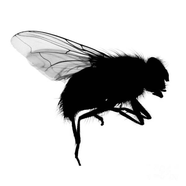 Photograph - Fly by Clayton Bastiani