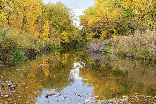 Photograph - Fly Fishing Stream Reflections by James BO Insogna
