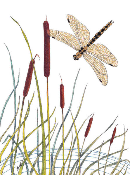 Bullrush Painting - Fly High Dragonfly by Stanza Widen