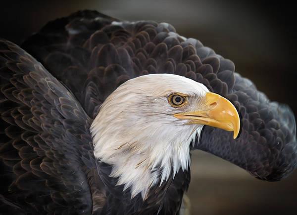 Wall Art - Photograph - Fly Like An Eagle by Bill Tiepelman